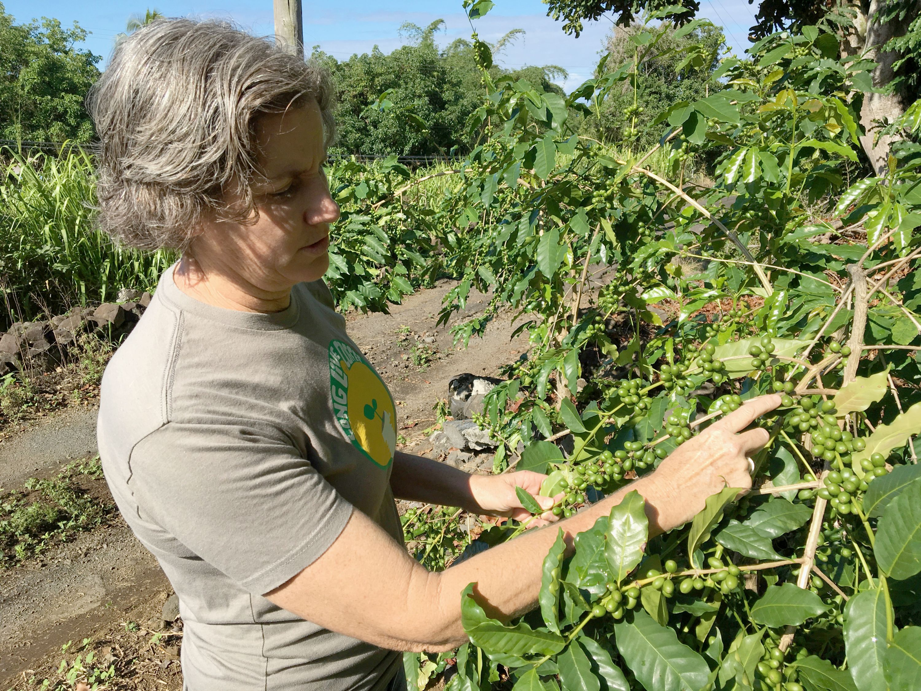 Suzanne Shriner inspects coffee cherries