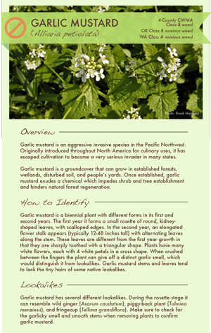 Garlic mustard factsheet