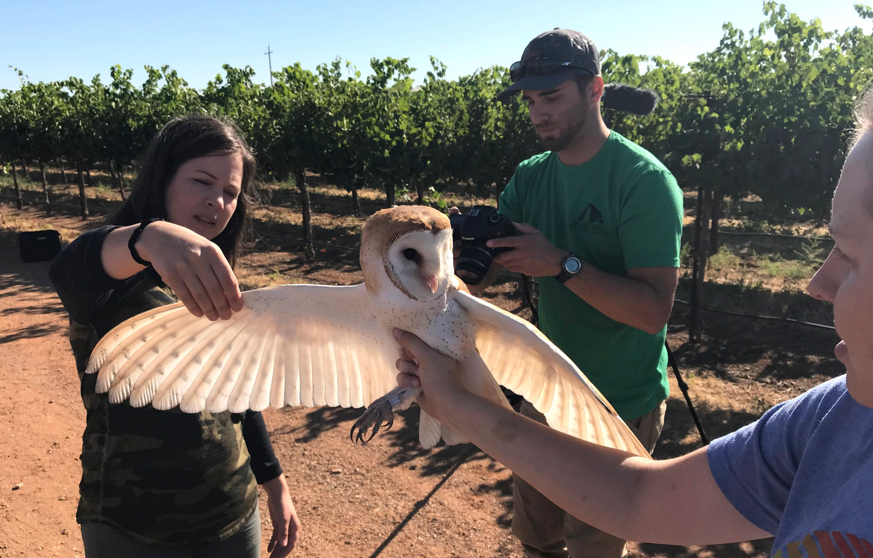 UC Davis students breanna Martinico, Ryan Bourbour and Emily Phillips photograph a barn owl