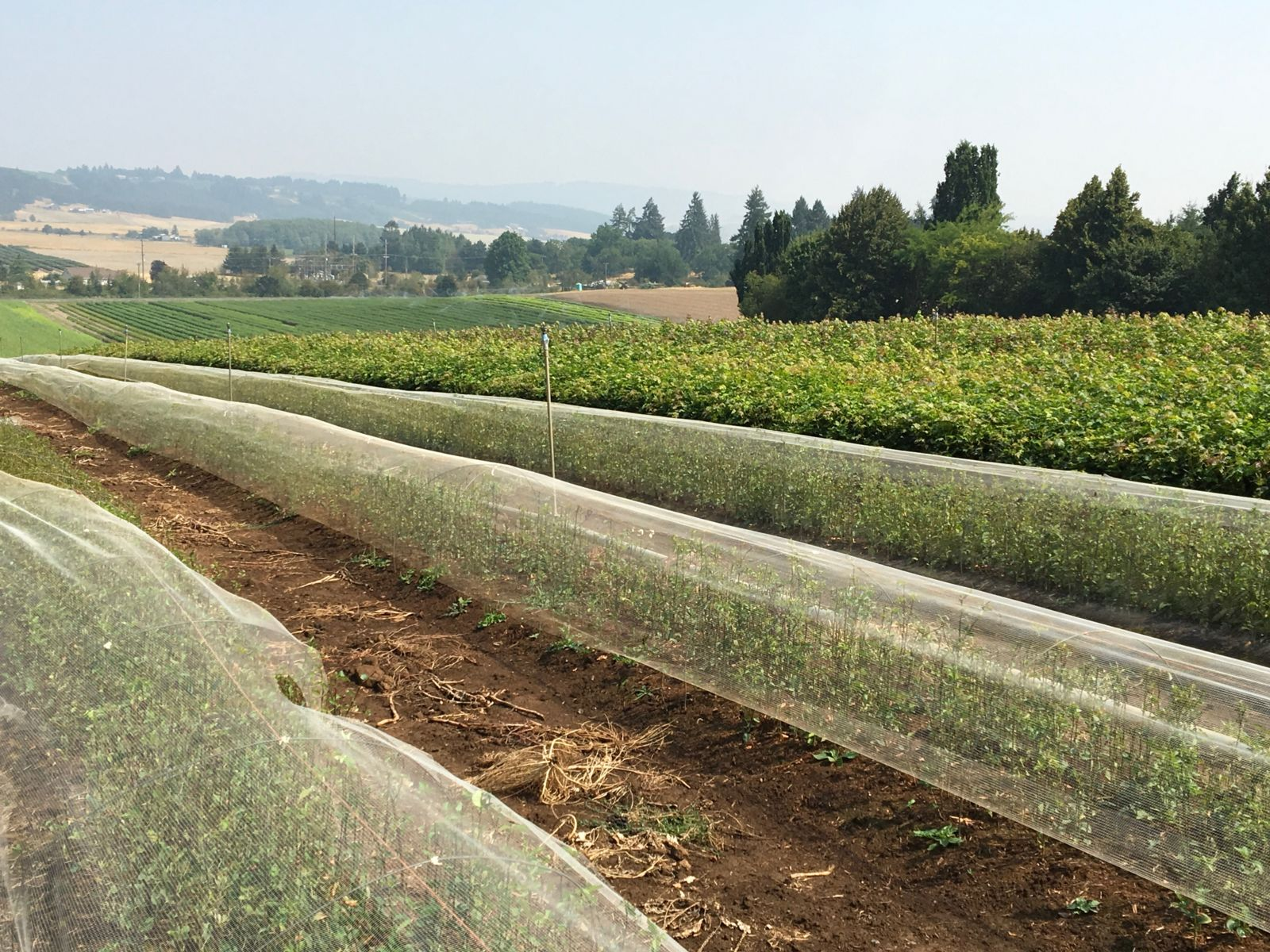 A field nursery in Oregon