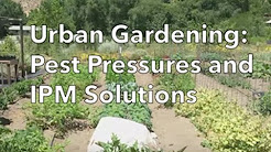Urban farm pests video